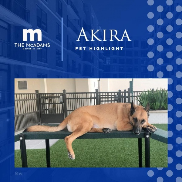 Have you met our sweet furry resident, Akira?