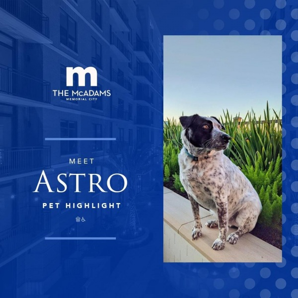 A pup that's out of this world, meet Astro! Rescued from Houston SPCA last year, this...